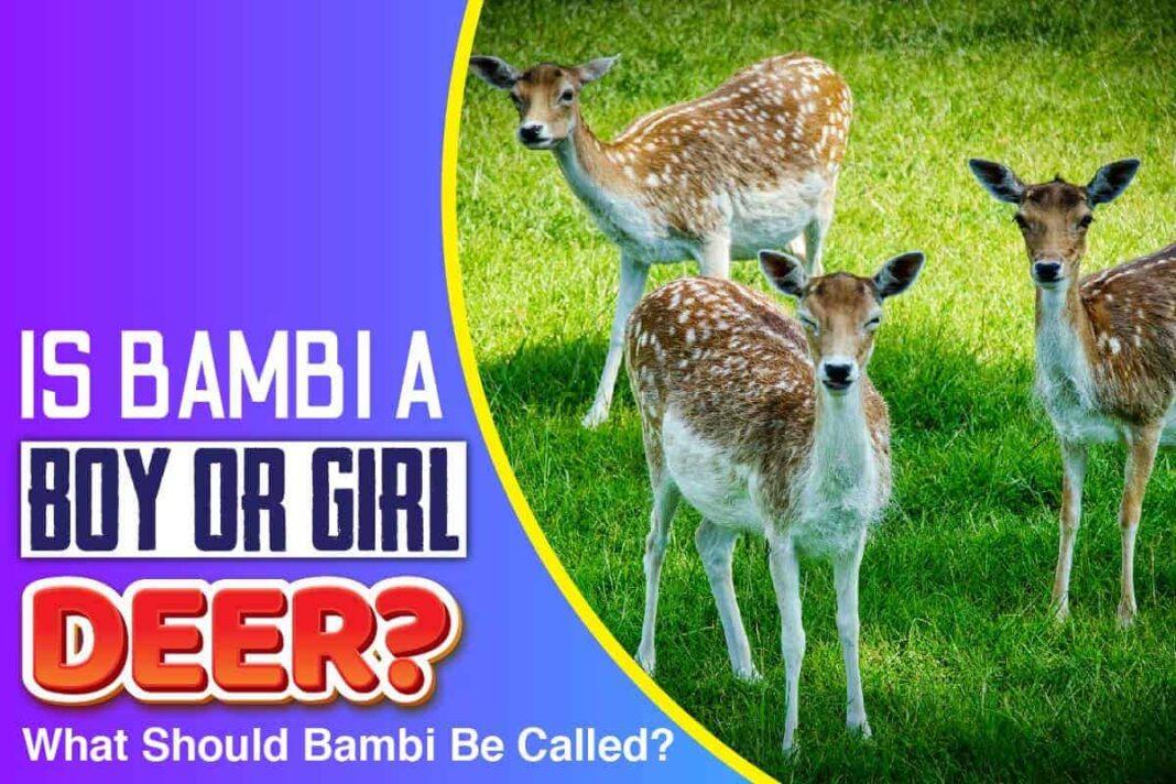 Is Bambi a Boy or Girl Deer.