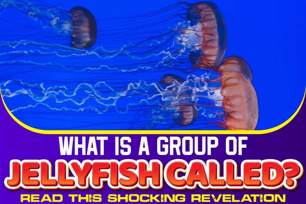 What Is A Group Of Jellyfish Called