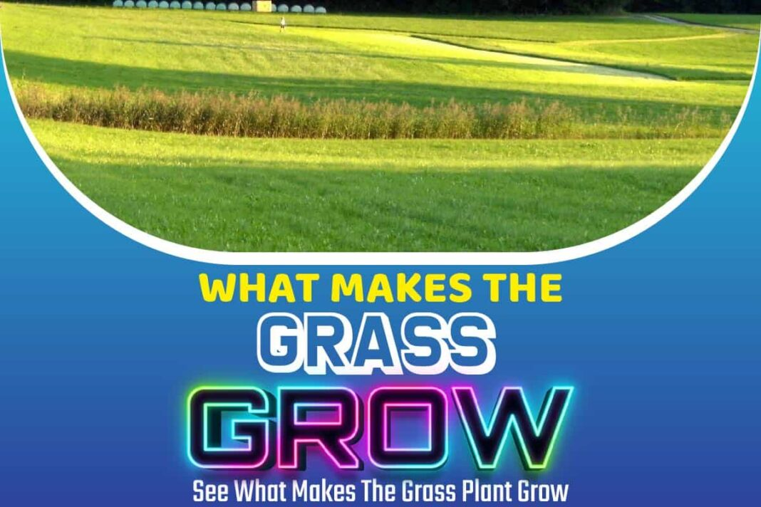 What Makes The Grass Grow
